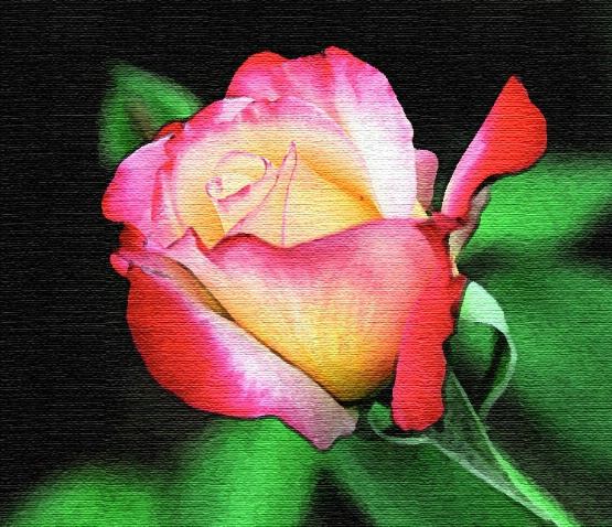 Who says a rose is just a rose...