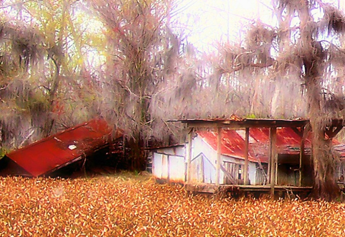 Swamp House 2