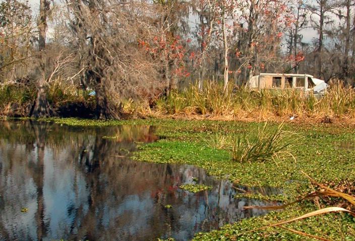 Swamp Junk