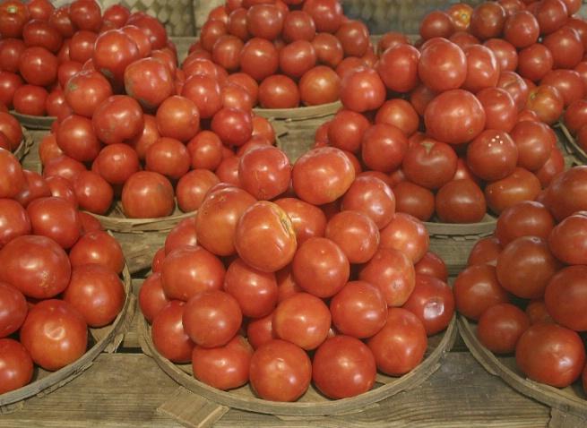 Celebrating the Tomato