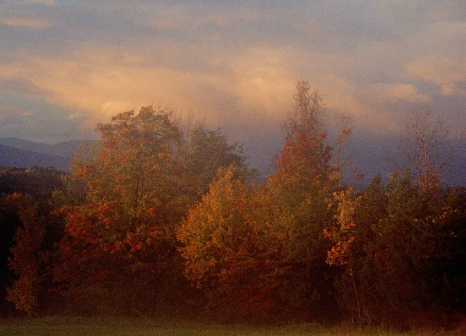 Autumn Trees After Storm