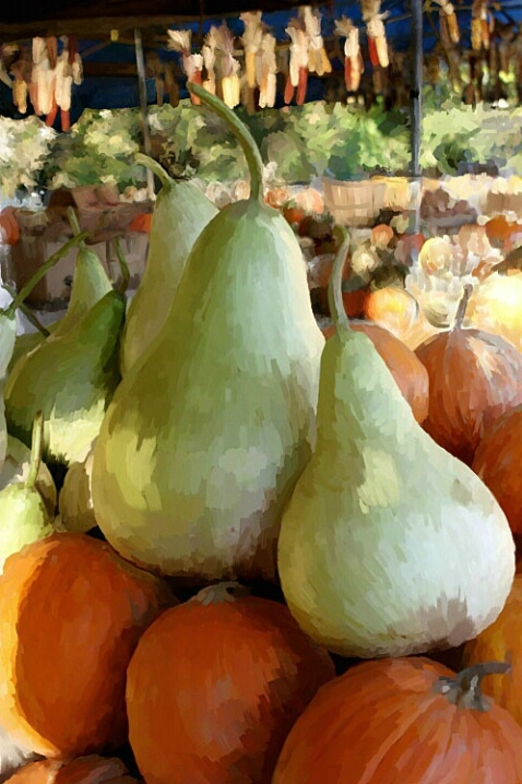 Gourds in Pear Clothing