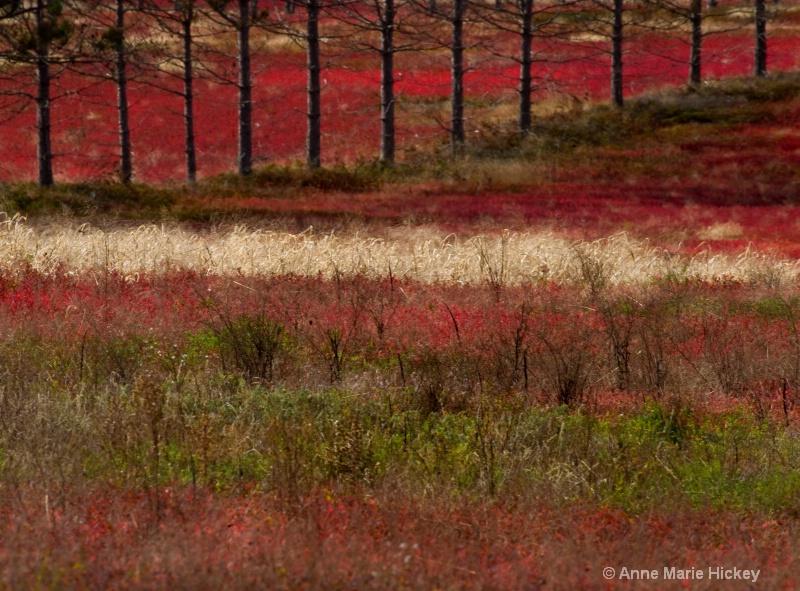 Blueberry Fields in Autumn