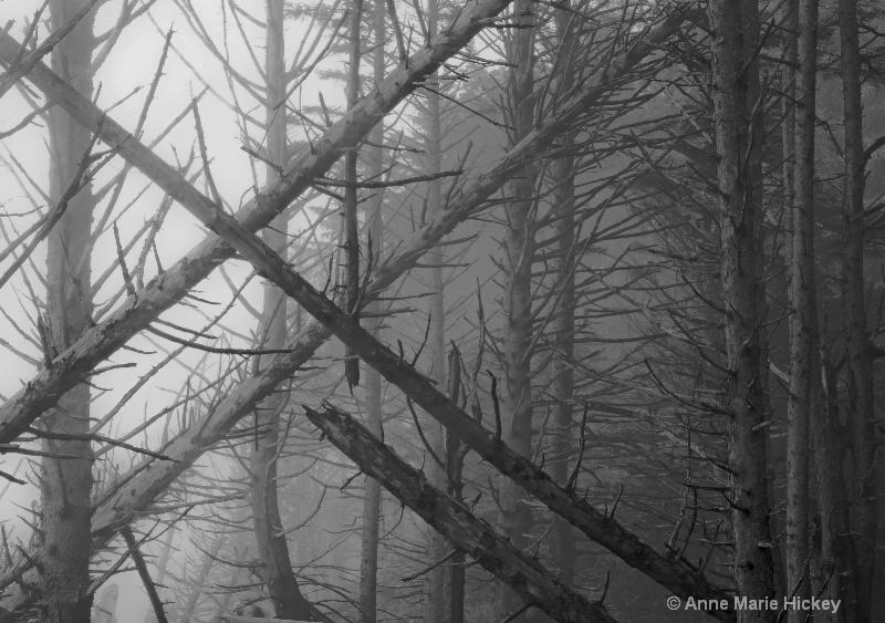 Ruby Beach in Fog