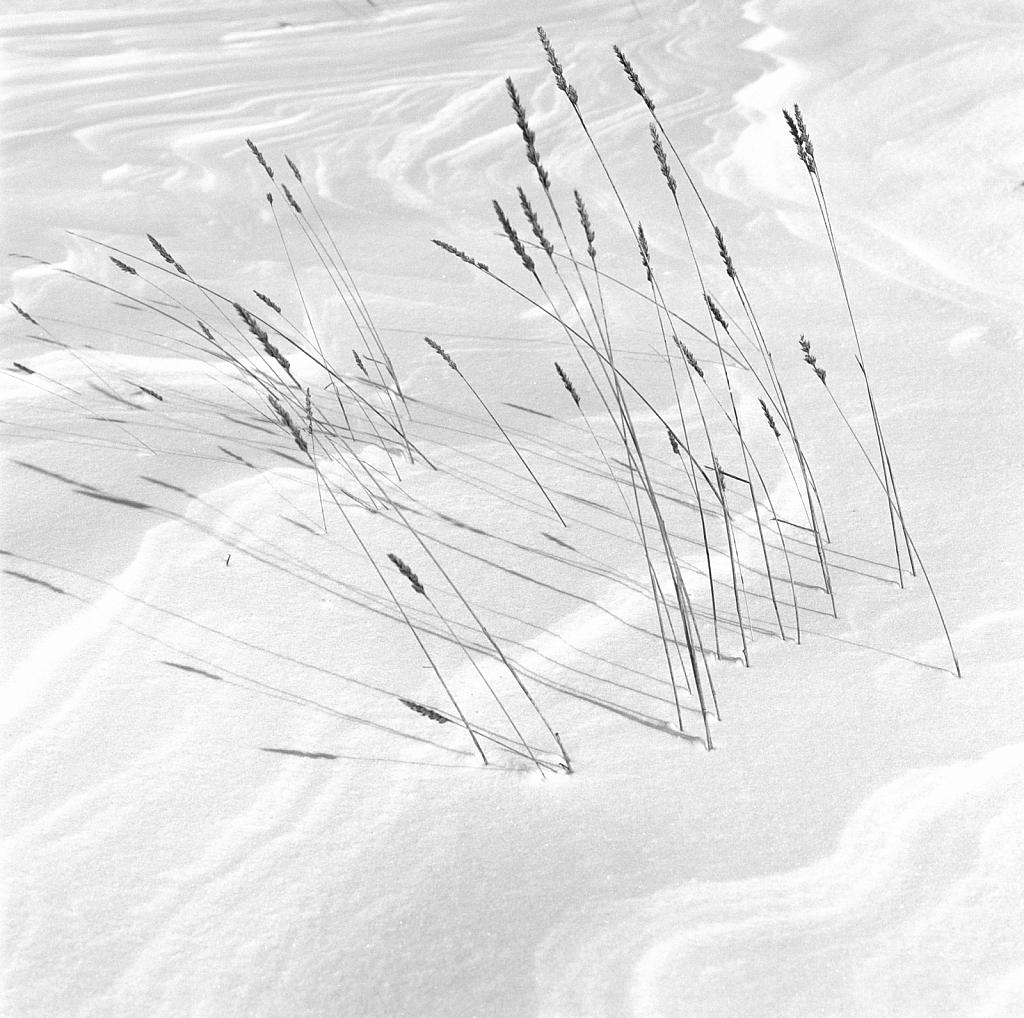 Reeds graphics on snow cap.