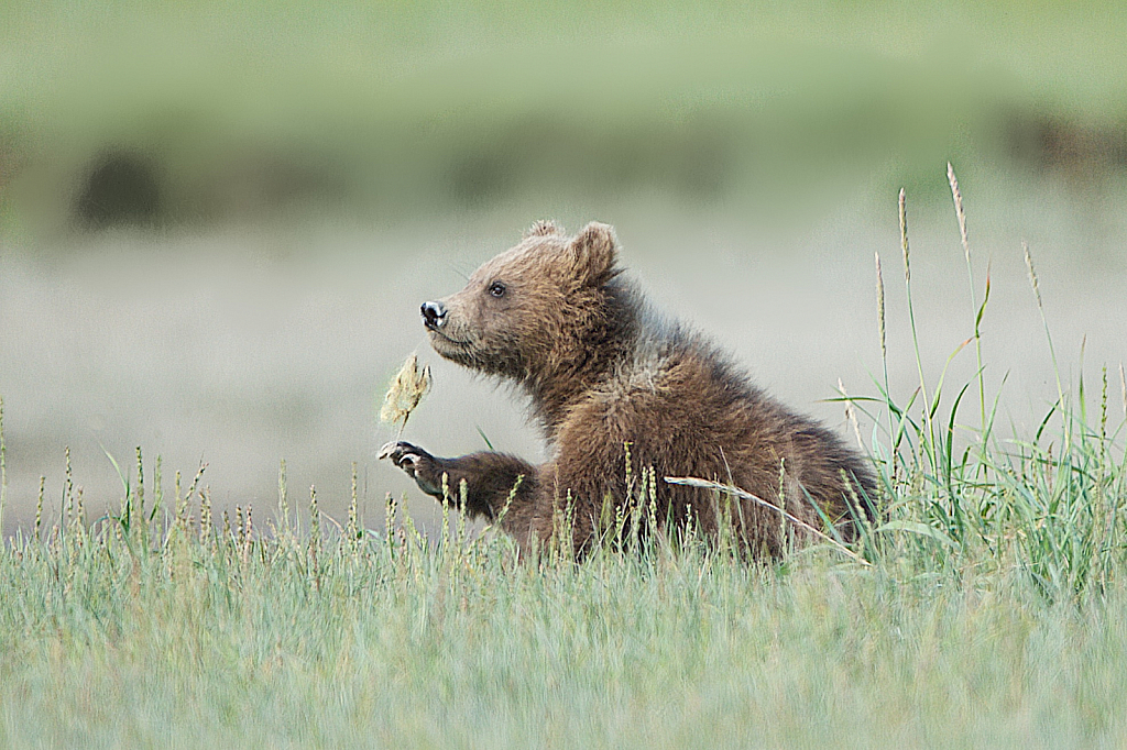 Baby Bear with Wildflower