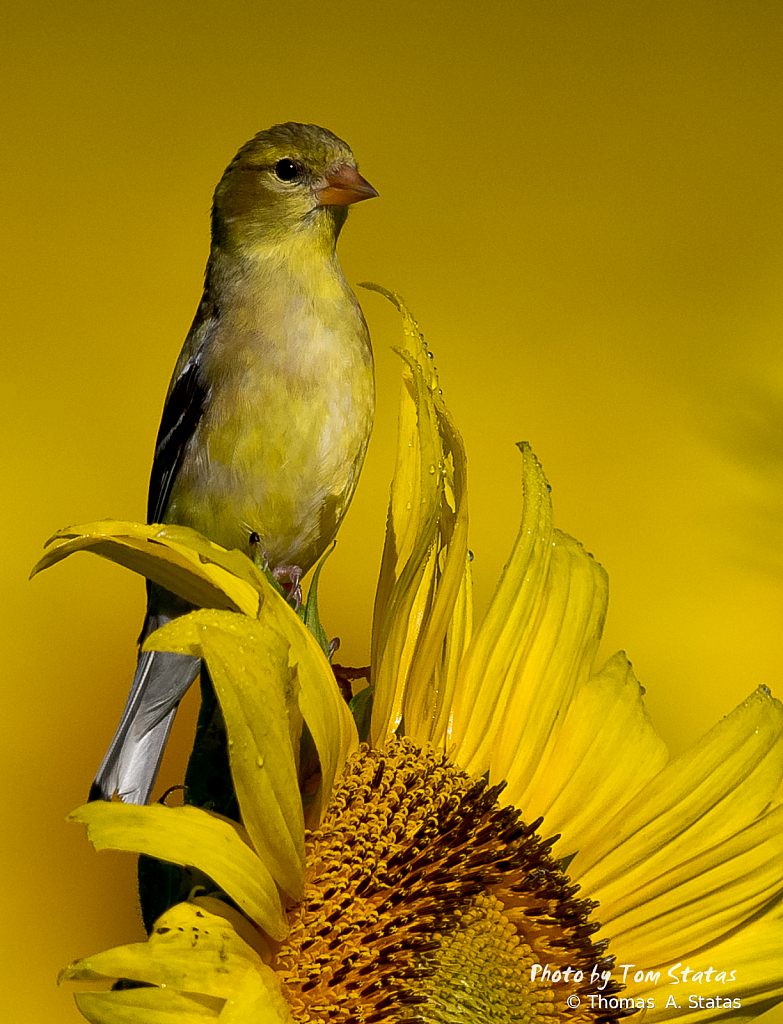 SunflowersJuly20197of10