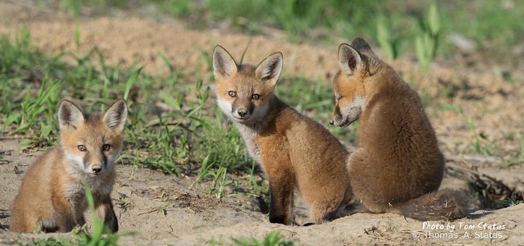 FoxKits4of5