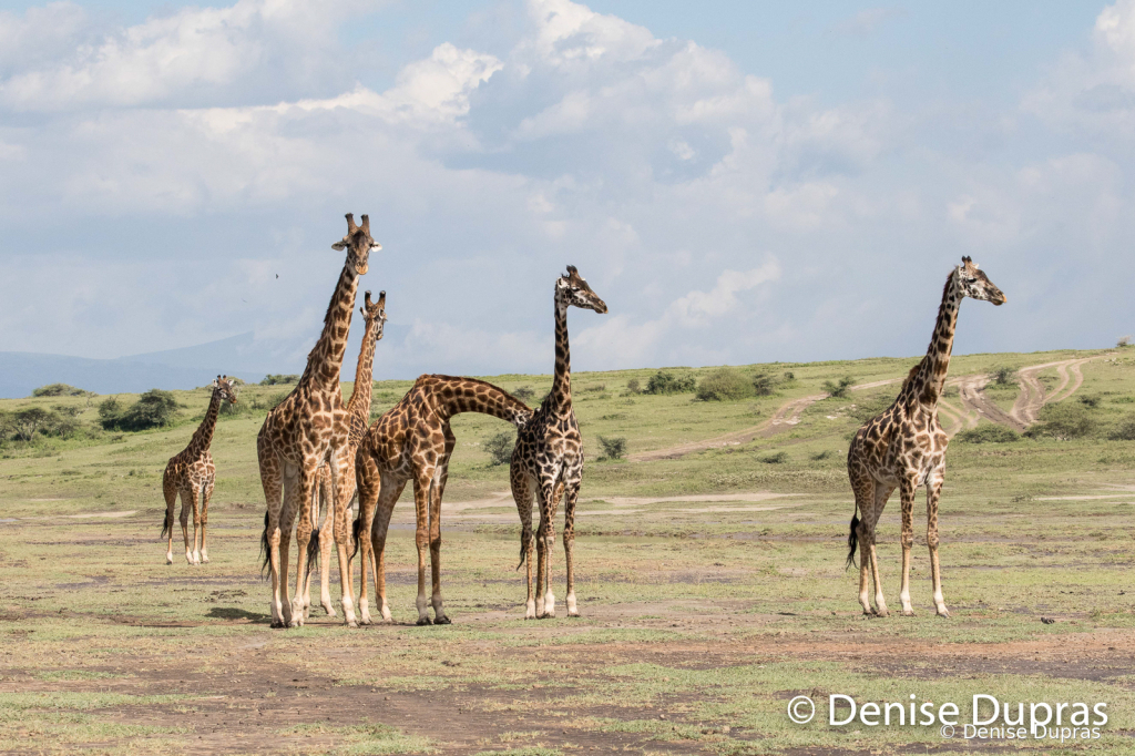 Giraffe9495