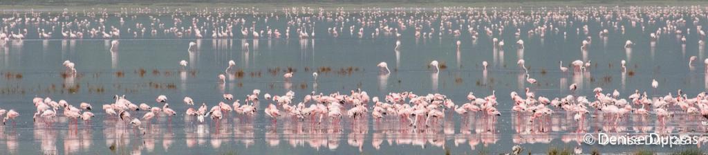 Flamingo4741