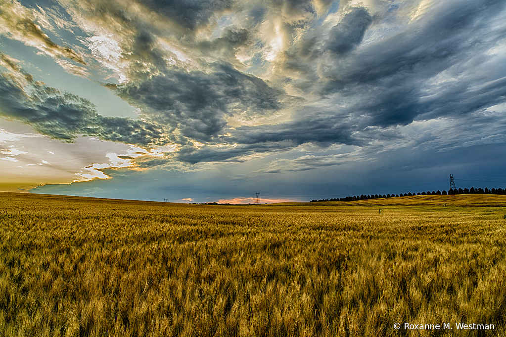 North Dakota wheat fields