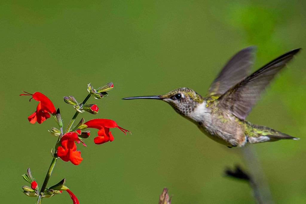 Here Comes the Hummer