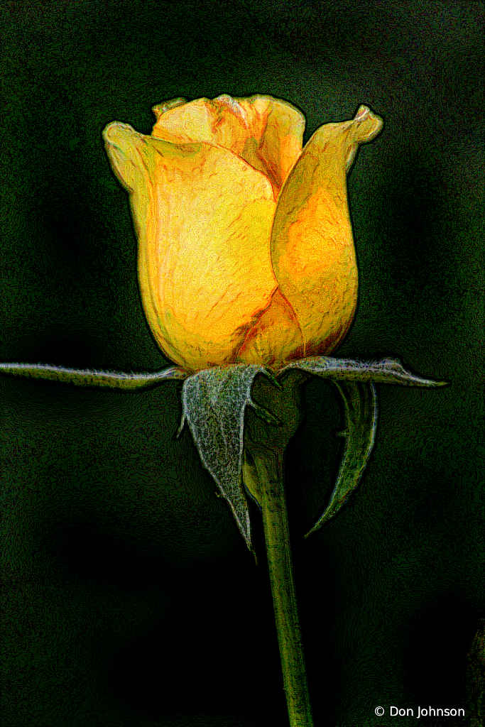 Artistic Profile-Yellow Rose 8-11-19 267