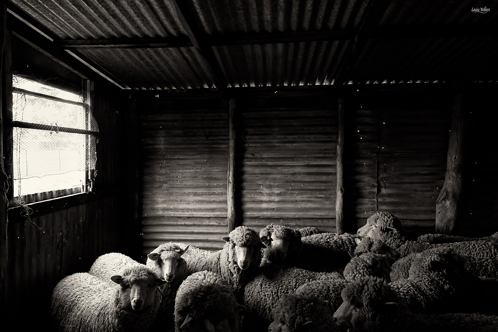 The Old Sheep Shed 2