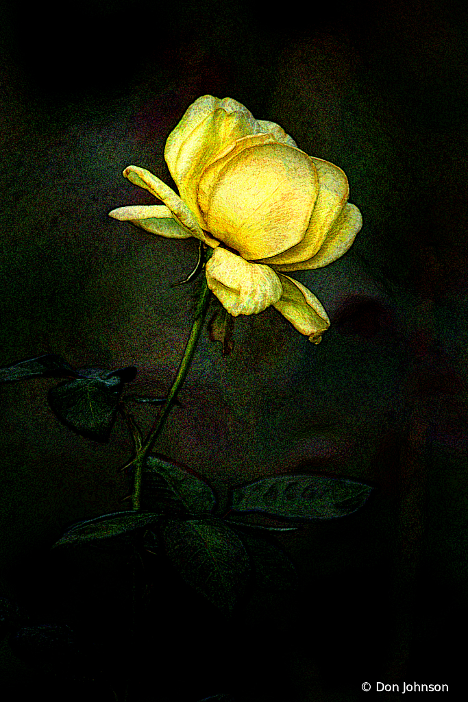 Artistic Profile of a Yellow Rose 8-11-19 133