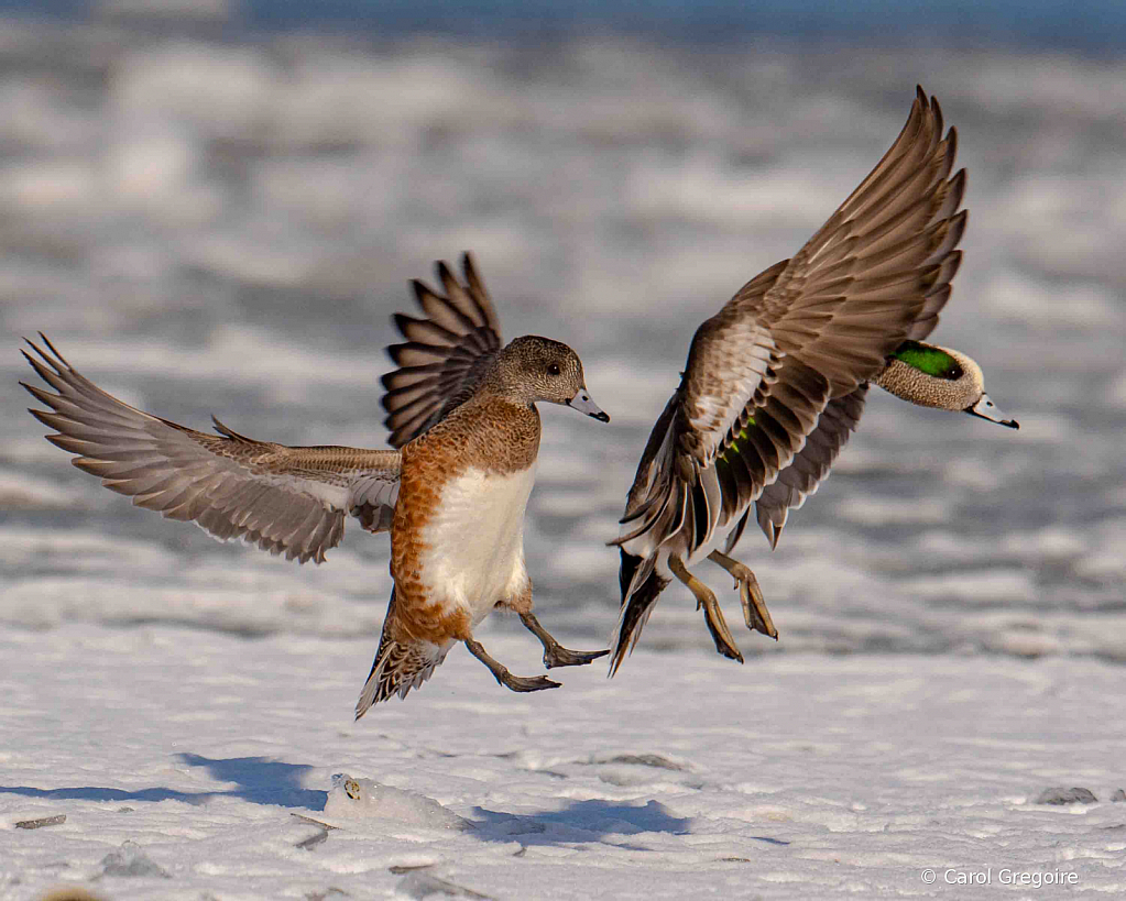 Landing Mates