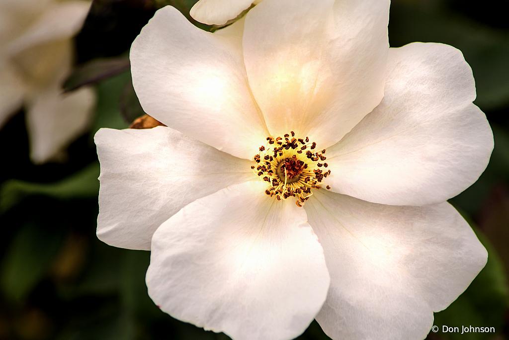 PGC White Rose 9-1-19 189
