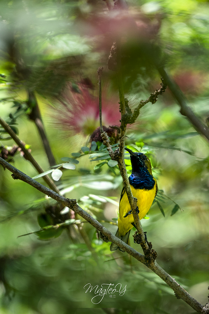 Sunbird on a perch