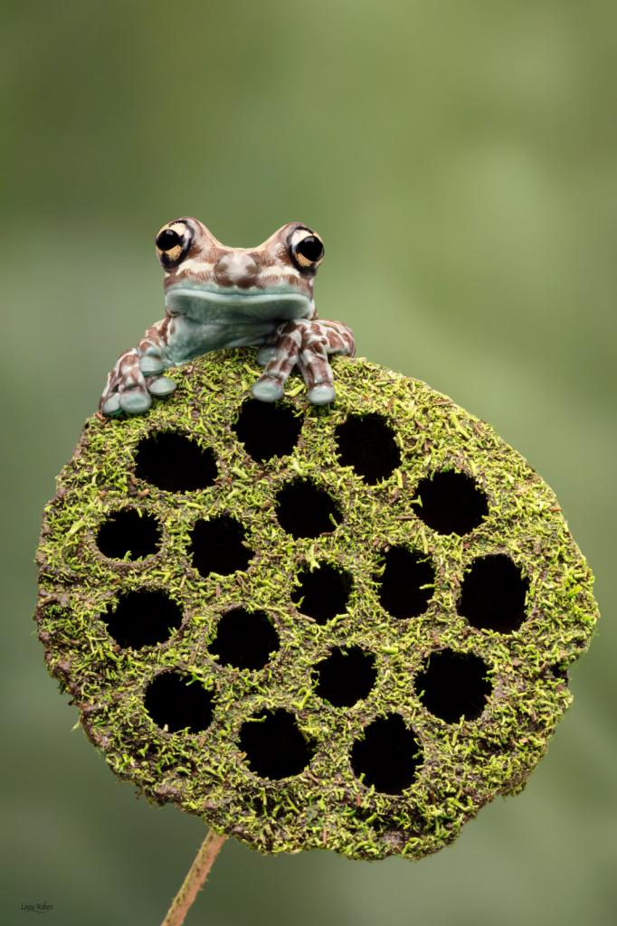 frog lollypop