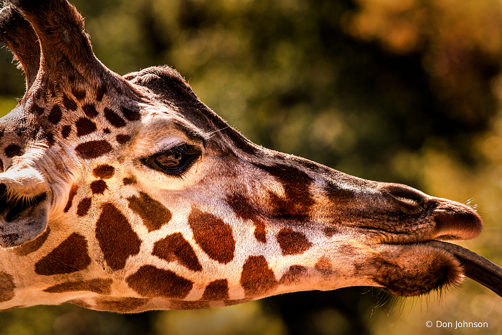 Giraffe Macro 10-5-19 185