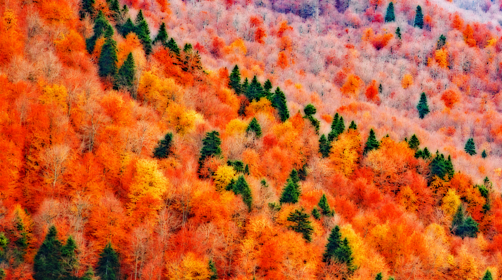 Impression in fall color mountainside.
