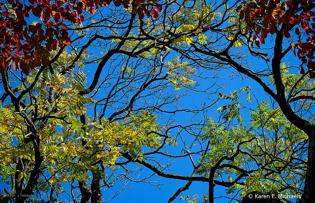 branches swimming in color