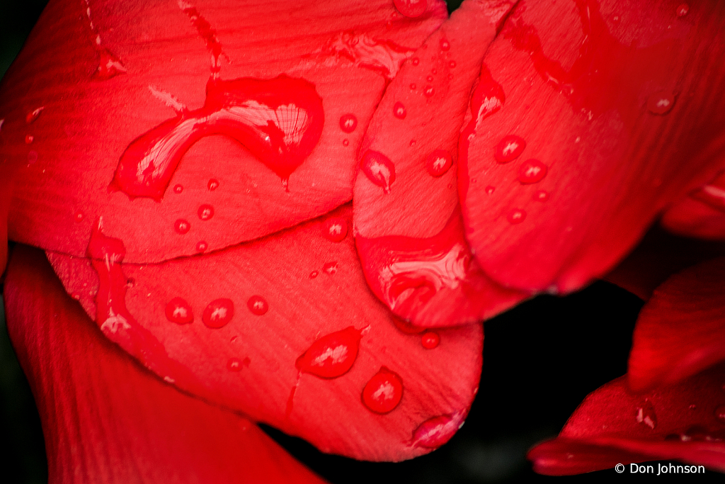 Water on Red Petals 2-24-19 360