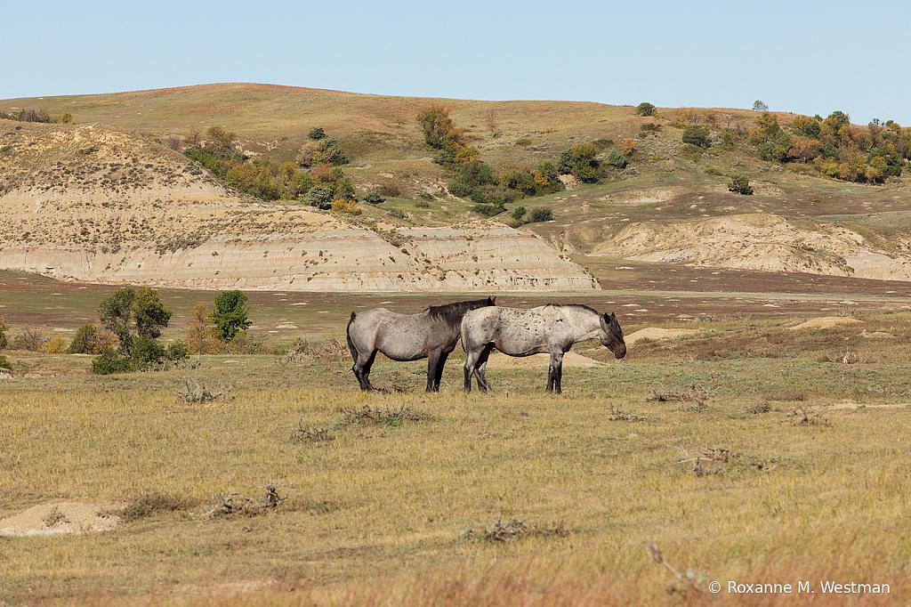 2019 Wild Horse herd 2