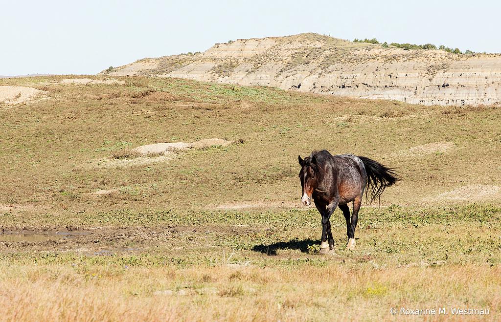 Wild Horse 2019