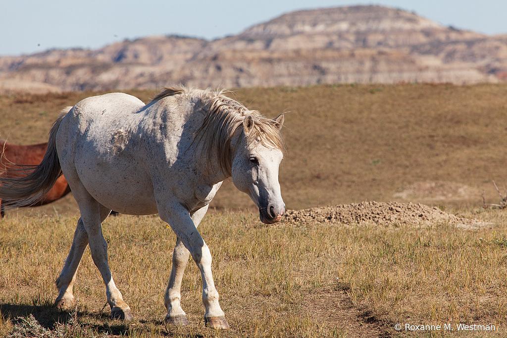 Life of wild horses