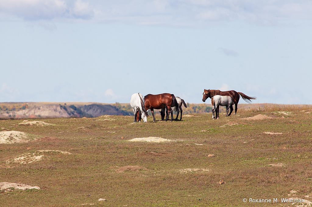 Wild horses 7 2019