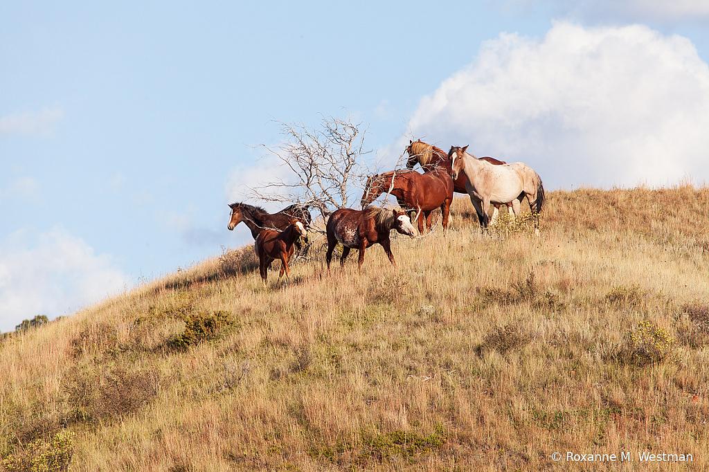 Wild horses 9 2019