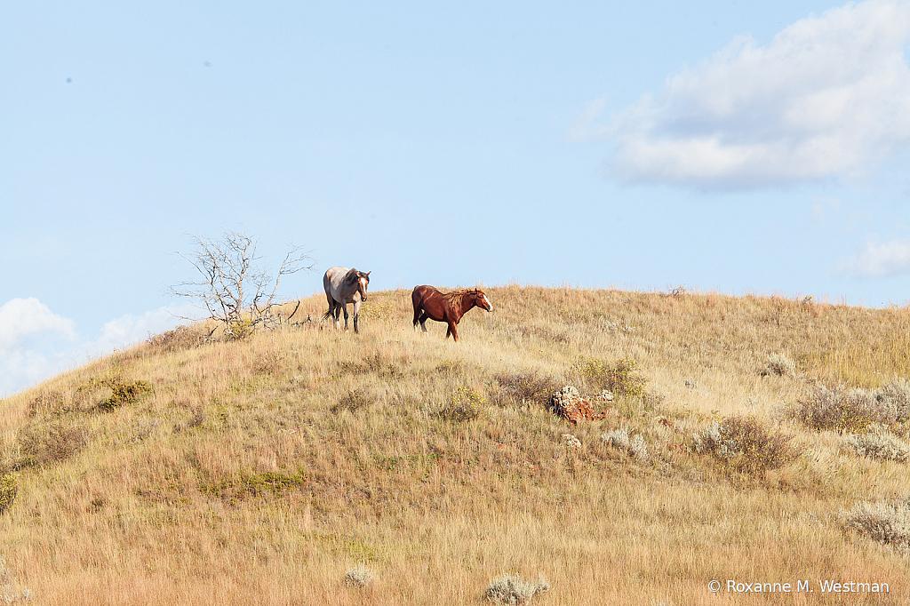 Wild Horses 15 2019