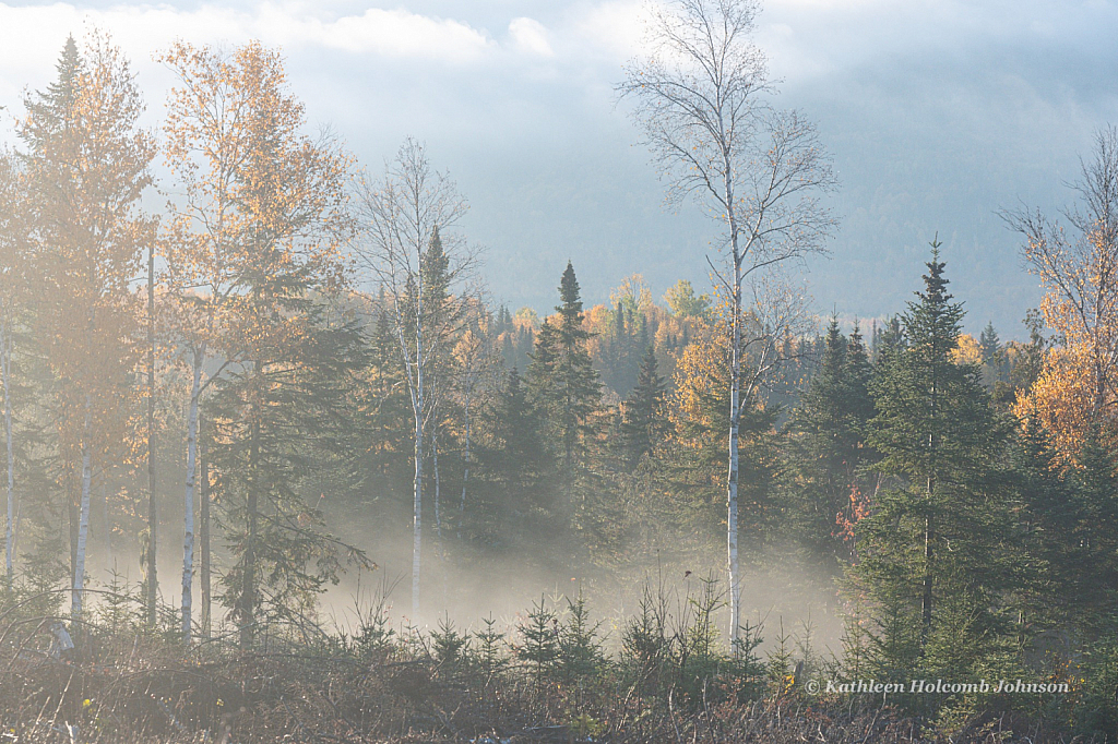 The Beauty of Early Morning Fog in Fall!