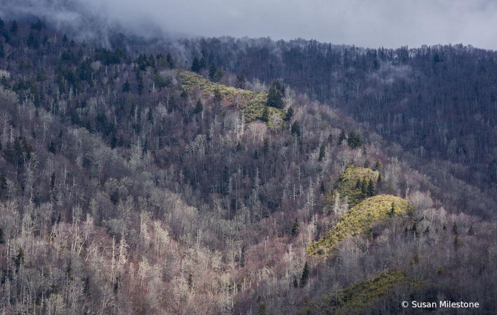 Smoky Mountains 0328