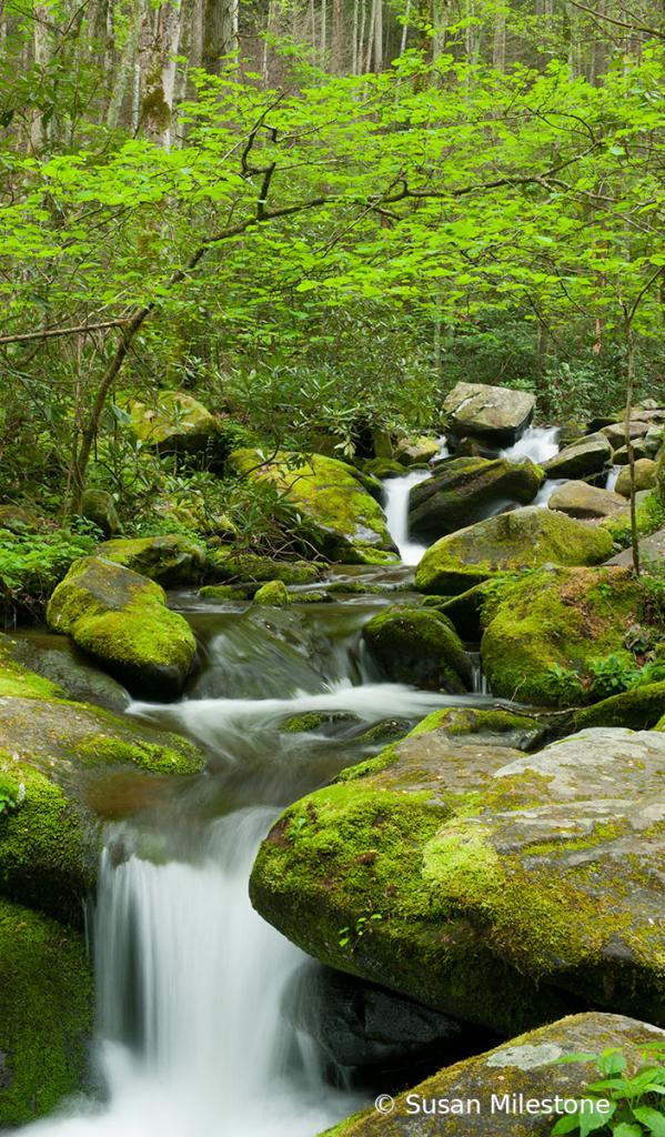 Roaring Fork Stream 4254
