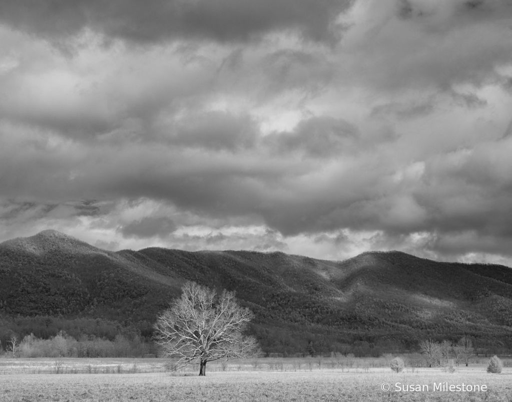Cades Cove Tree and Mountains IR 3566