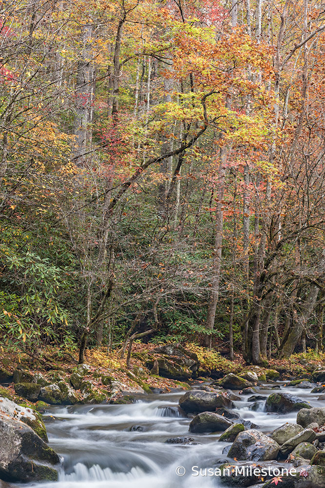 Tremont Fall Stream 1205