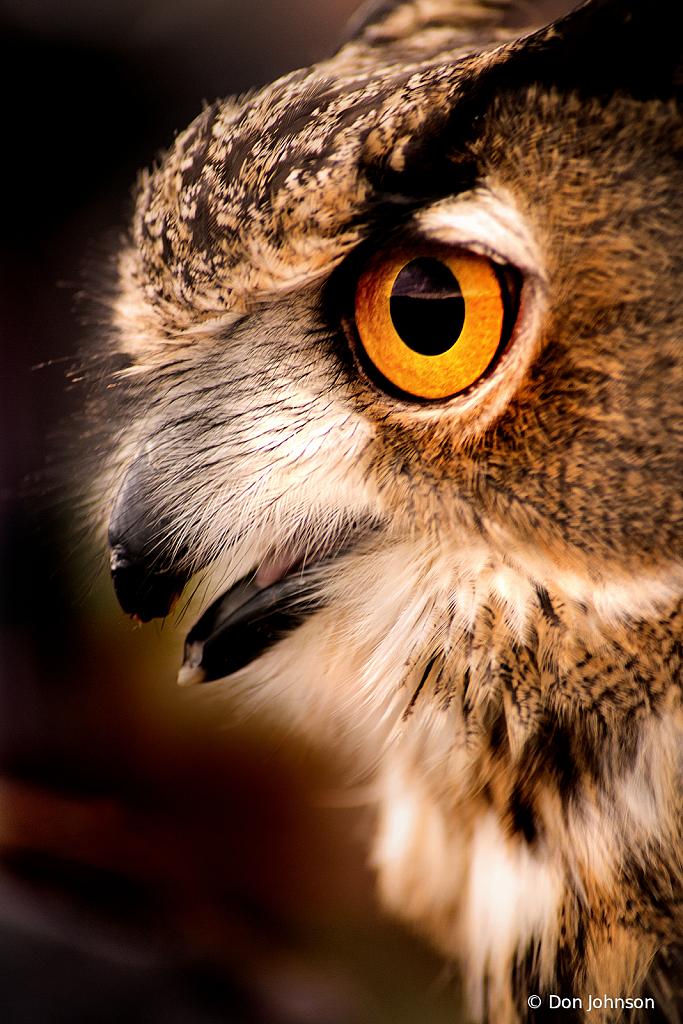 Owl Profile 11-10-19 187