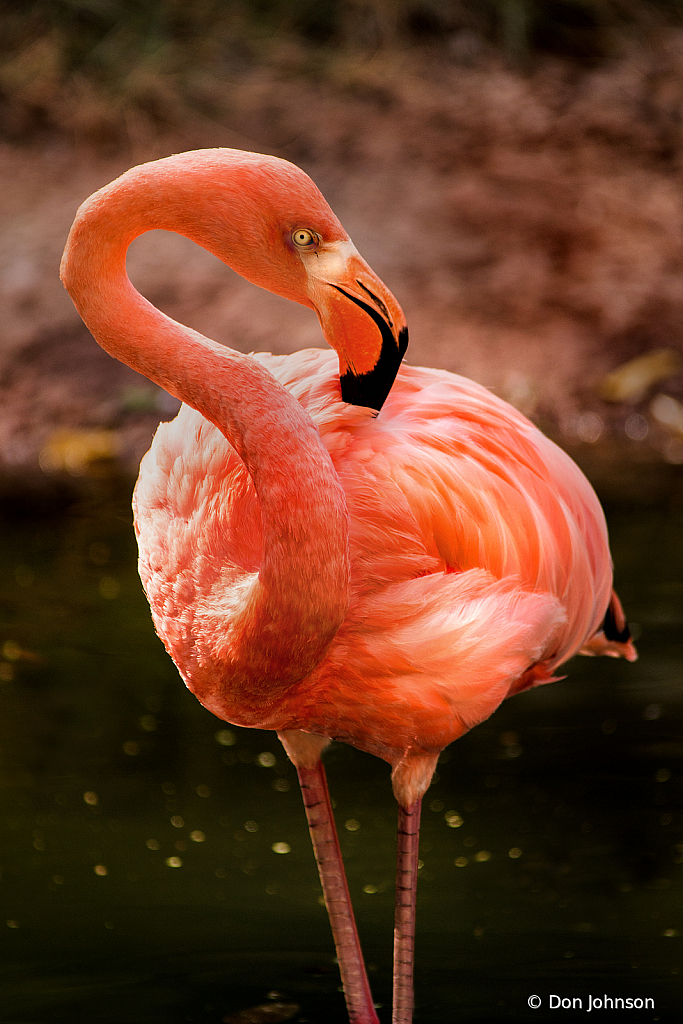 Flamingo Pose 10-5-19 140