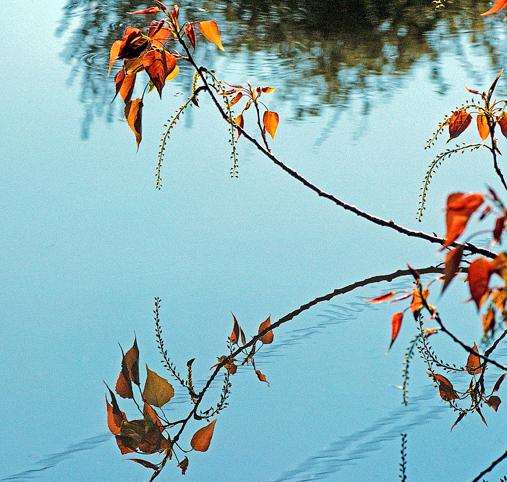 Reflection on the pond.