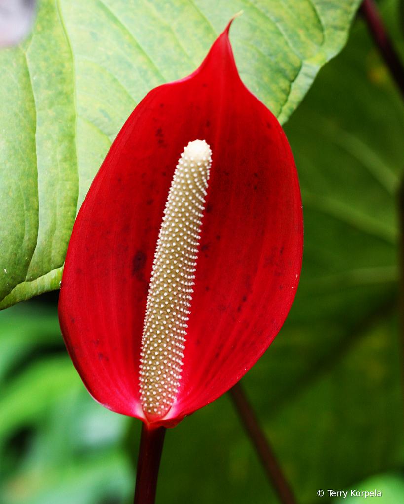 Hilo Botanical Gardens