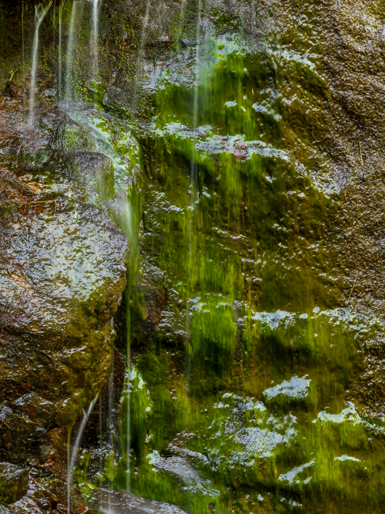 Wet Mossy Rock