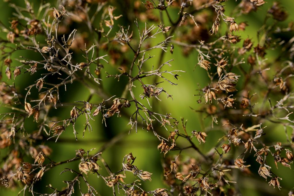 Flower Seed Heads