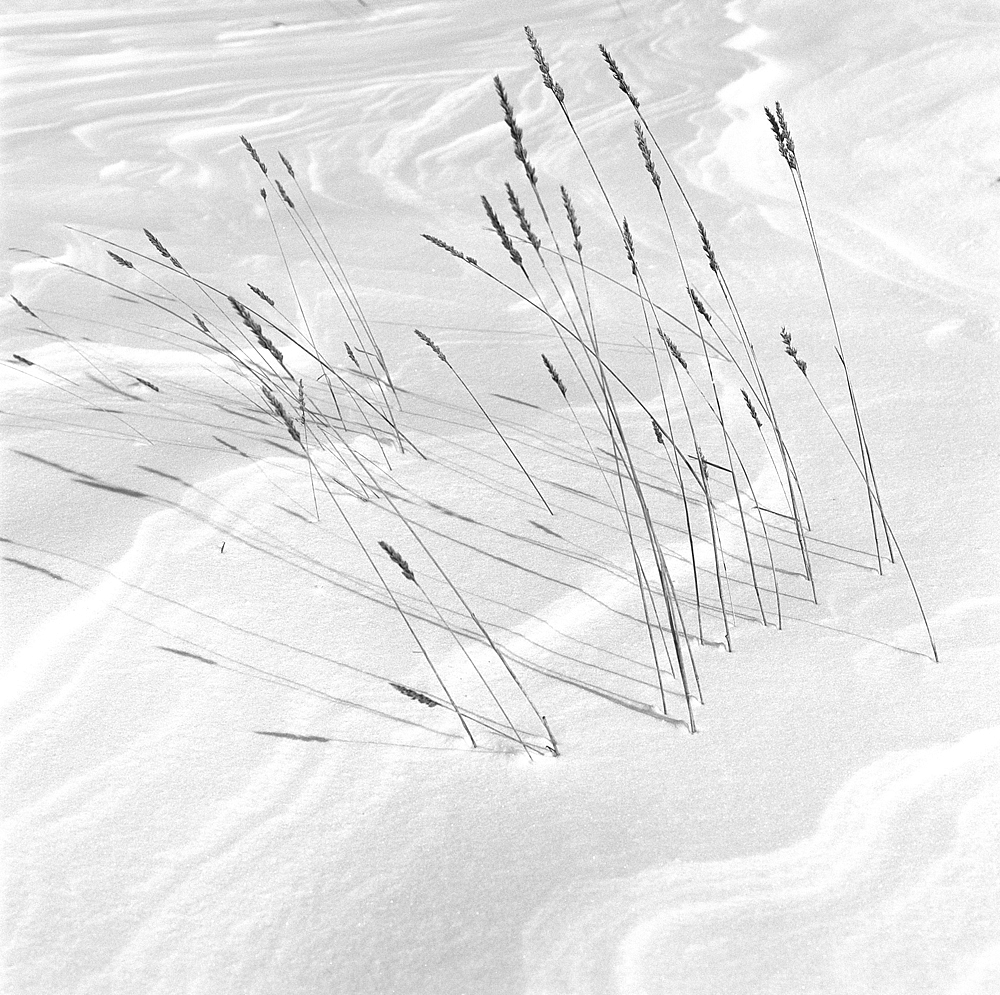 Snow ripples and rushes.