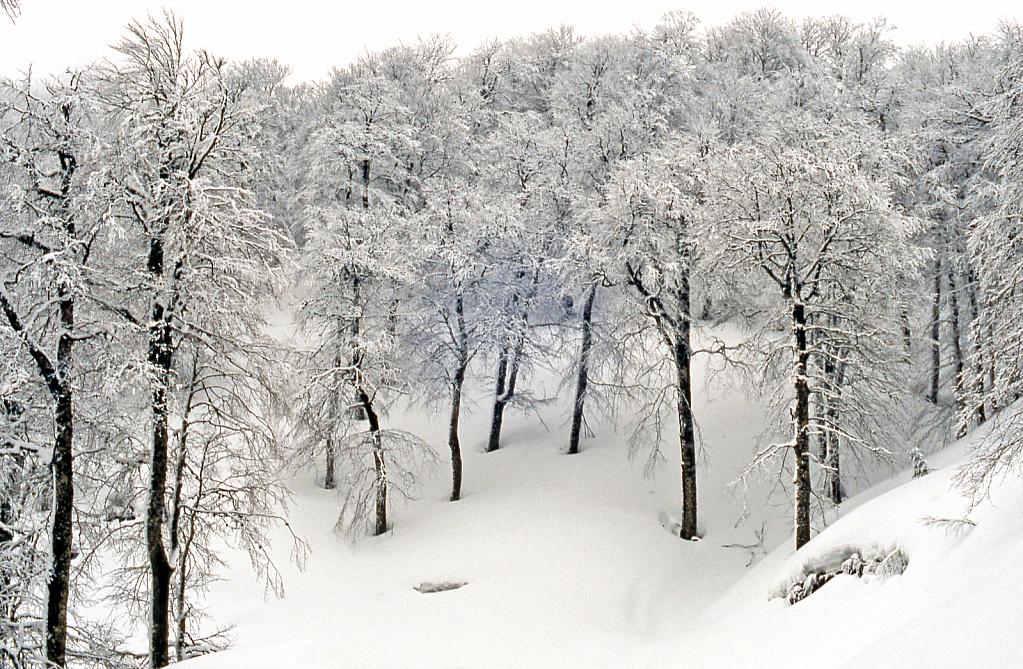 Winter wood.
