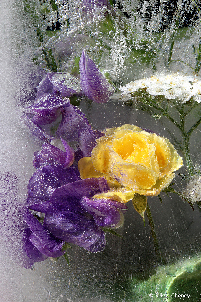 Yellow rose and sweet pea in ice