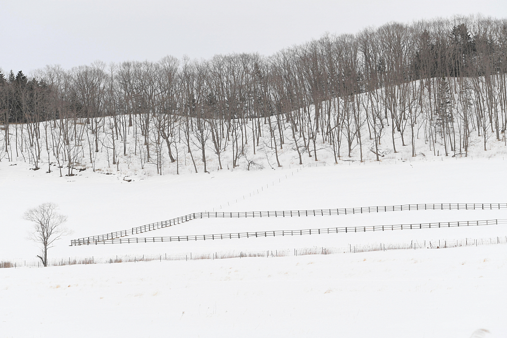 Lines and Fences in Hokkaido