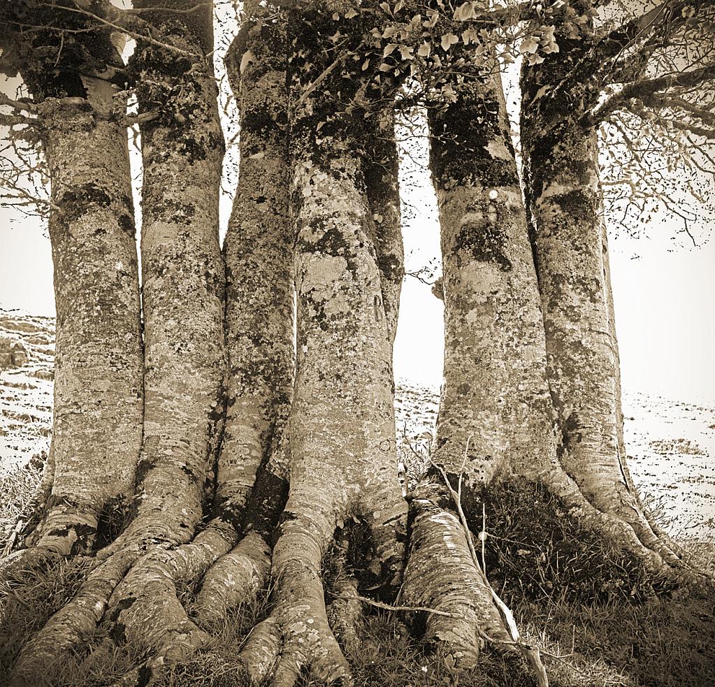 A six member tree family!