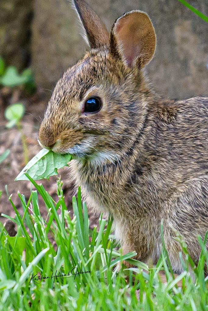 Hungry Bunny!